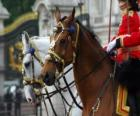 Pferde mit Ornamenten