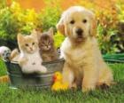 Doggy mit zwei Kätzchen