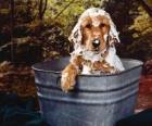 Hund in der badewanne