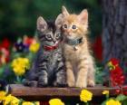 zwei Katzen mit Halskette