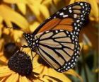 Schmetterling auf einer gelben Blume