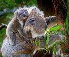 Koala auf einen Baum klettern