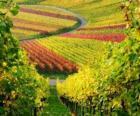 Herbstlandschaft im Weinberg