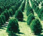 Weihnachtsbaum Bauernhof