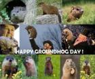 Der Waldmurmeltiere Tag ist ein Feiertag in den USA und Kanada am 2. Februar ist feiern