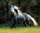 Schön Pferd mit langer Mähne und langem Schwanz
