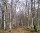 Wald ohne Blätter im Winter