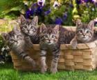 Vier Kätzchen in einem Korb