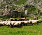 Schäferei tendenziell seine Herde