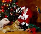 Mehrere Tiere mit Santa