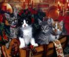 Niedliche Kätzchen am Weihnachtstag