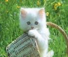 Hübsch Katze weiß