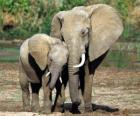 Mom Steuerung der kleine Elefant mit der Hilfe ihres Rüssel