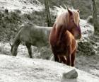 Pferde grasen auf dem Gebiet