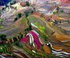 Die Terrassen der Provinz Yunnan, China
