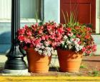 Blumen in einem Topf oder Blumentopf