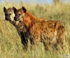 Die Hyänen