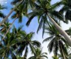 Tropischen Palmen
