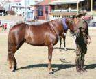 Waler Pferd mit Ursprung in Australien