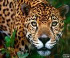 Jaguar-Kopf