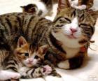 Mama Katze mit ihrem Baby-Katze