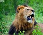 Ein junger Löwe