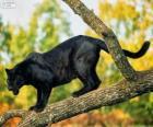 Panther schwarz auf einem Ast eines Baumes