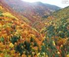 Wald in herbstlichen Farben