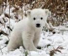 Ein kleiner Bär