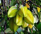 Karambole, exotische Früchte