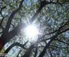 Niederlassungen und Sonne