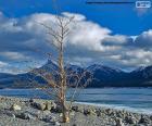 Ein toter Baum nahe dem See