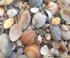Muscheln und Steine Meer