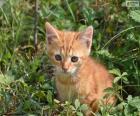 Wertvollen Kätzchen