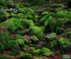 Moos bedeckten Steinen