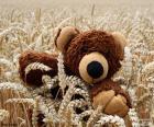 Teddybär, Getreide