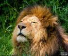 Löwe unter der Sonne
