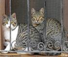 Zwei Katzen in einem Fenster