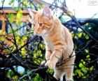 Ein Kätzchen in einem Baum