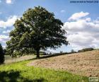 Baum in Gepflügtes Feld