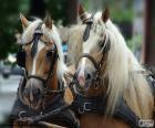 Kaltblüter pferde