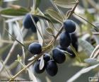 Schwarze Olive branch