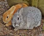 Ein paar Kaninchen
