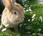 Kaninchen im Frühling