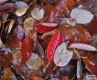 Blätter im Herbst nass