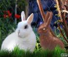 Weißes Kaninchen und andere Schokolade