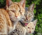 Drei Katzen zu beobachten