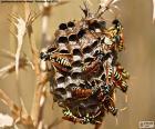 Wasp Schwarm