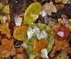 Blätter und Eis
