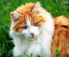 Eine elegante Katze